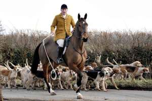 The Kimblewick Hunt > www.kimblewickhunt.co.uk