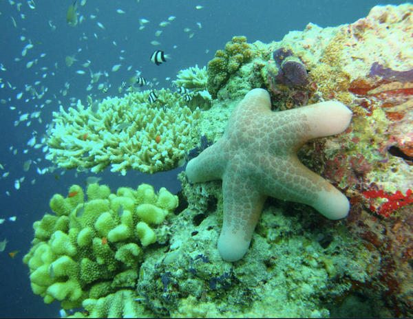 este-ano-habrian-muerto-mas-corales-que-nunca_full_landscape.jpg